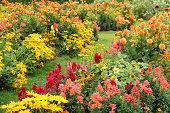Large flower garden in summer.