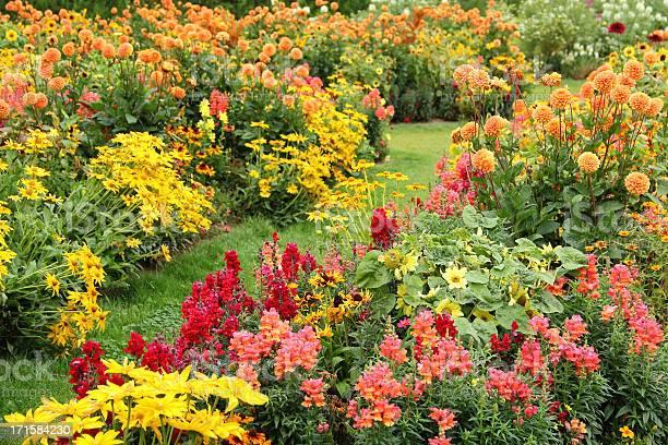 Photo of Flower garden in summer