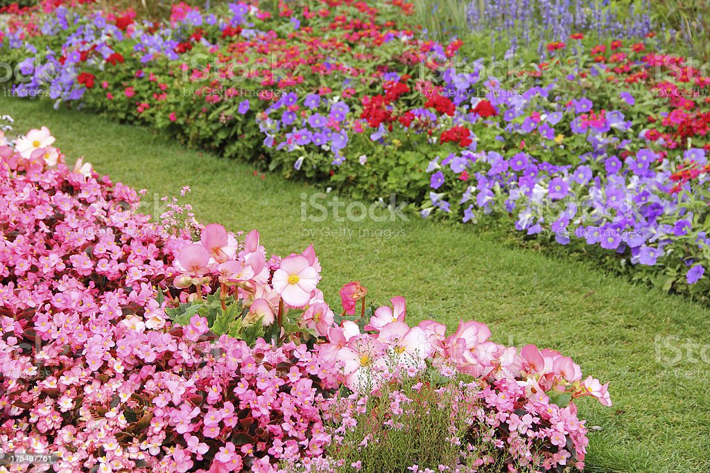 Flower garden im Sommer – Foto