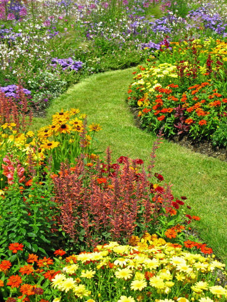 Flower garden in summer Large flower garden in summer perennial stock pictures, royalty-free photos & images