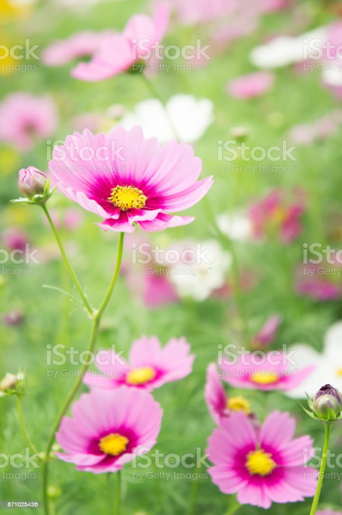 Flower Garden In The Field Pink Flowers On The Nice Happy Day Stock