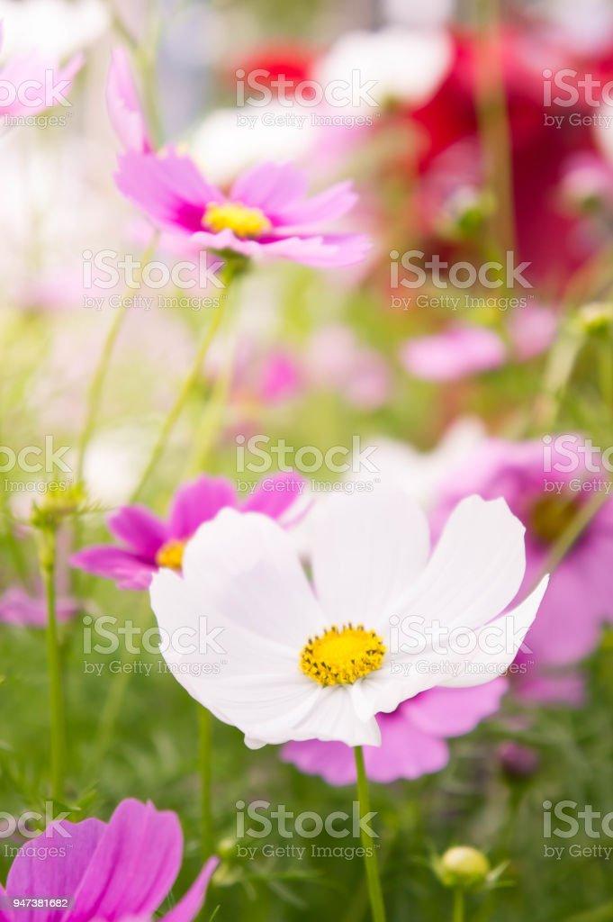 Flower garden in the field pink flowers on the nice happy day stock flower garden in the field pink flowers on the nice happy day royalty free mightylinksfo
