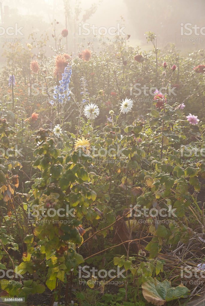 Flower garden in the morning stock photo