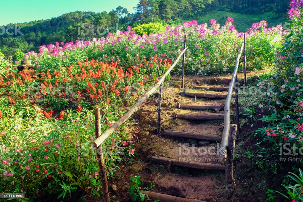 Flower garden on the mountain and stairs stock photo