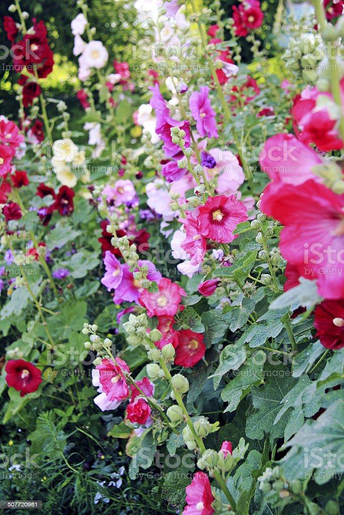 Flower garden - paradise stock photo