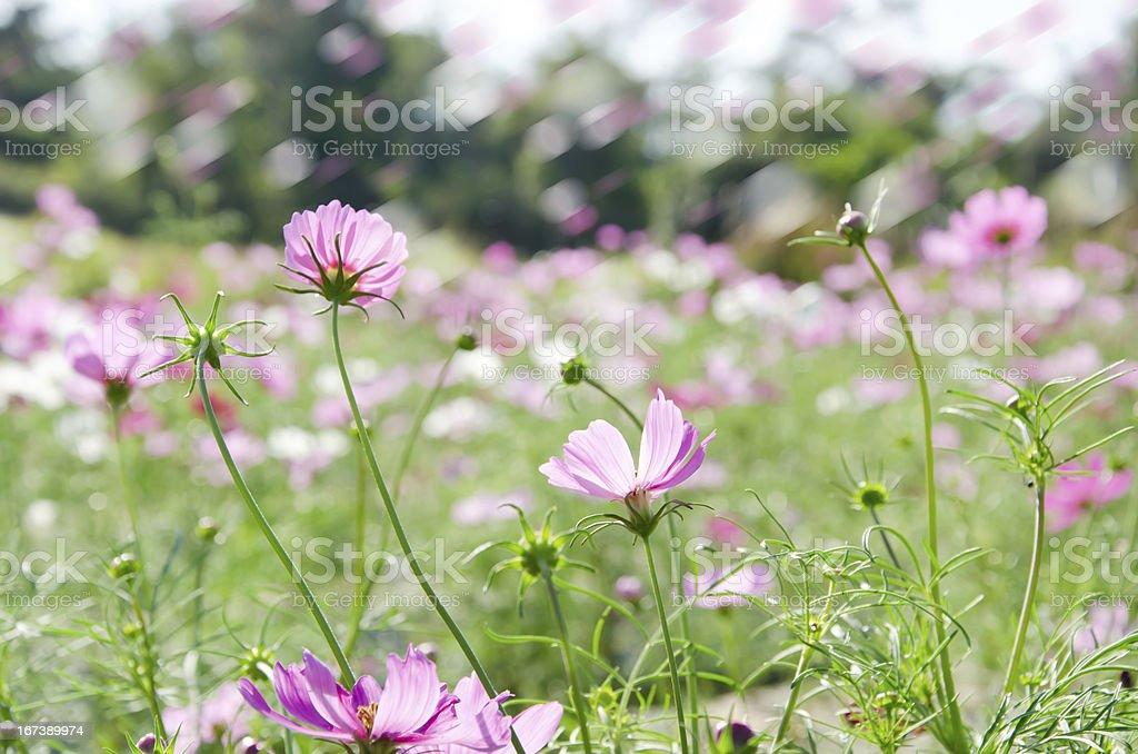 flower garden royalty-free stock photo