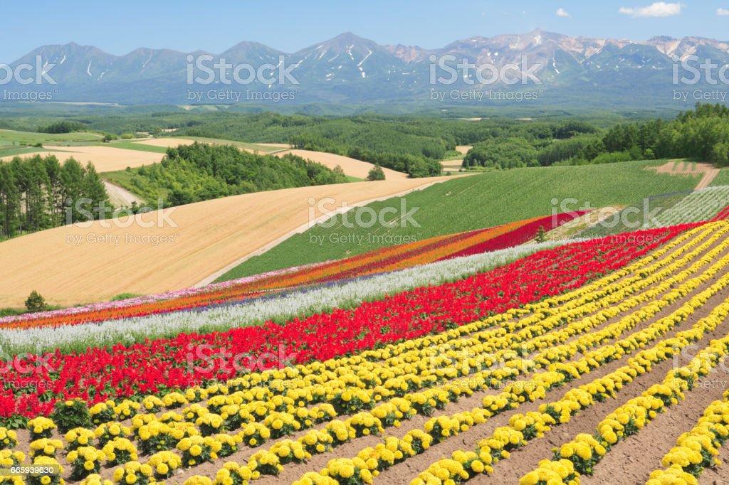 Flower garden foto stock royalty-free