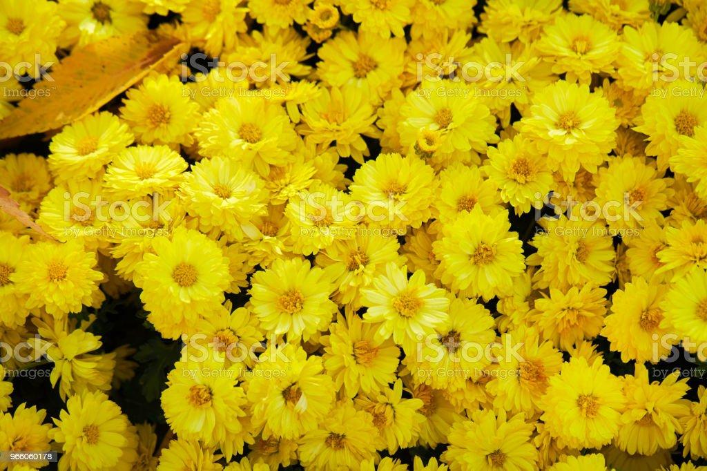 Blomma trädgård - Royaltyfri Bildbakgrund Bildbanksbilder