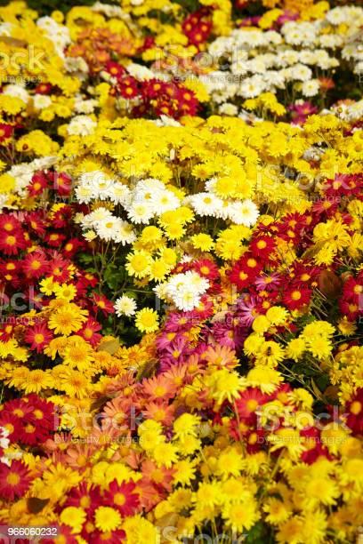 Flower Garden Stockfoto und mehr Bilder von Baumblüte