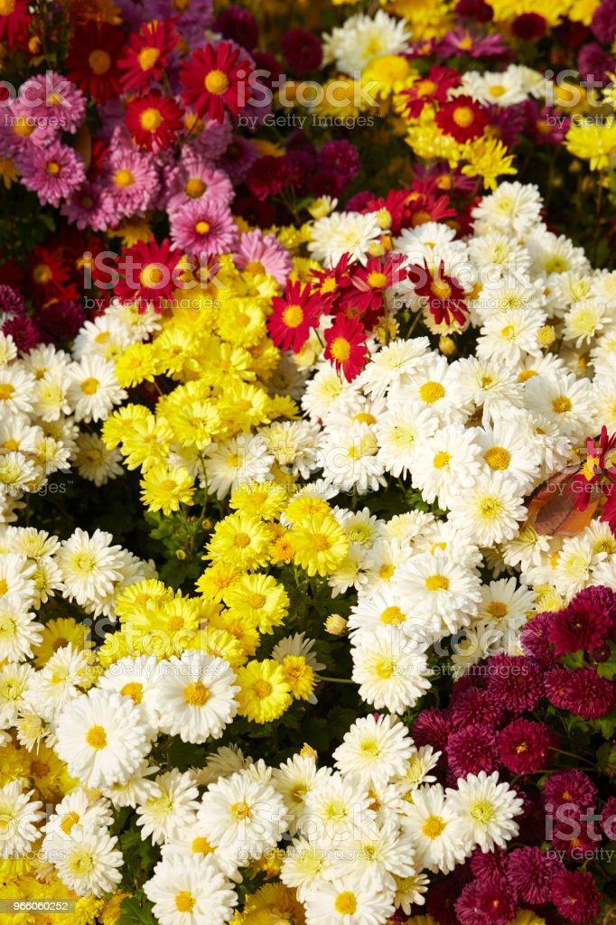 Flower garden - Royalty-free Achtergrond - Thema Stockfoto