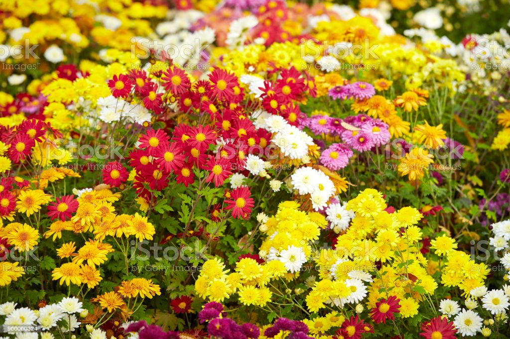 Flower garden  - Lizenzfrei Baumblüte Stock-Foto