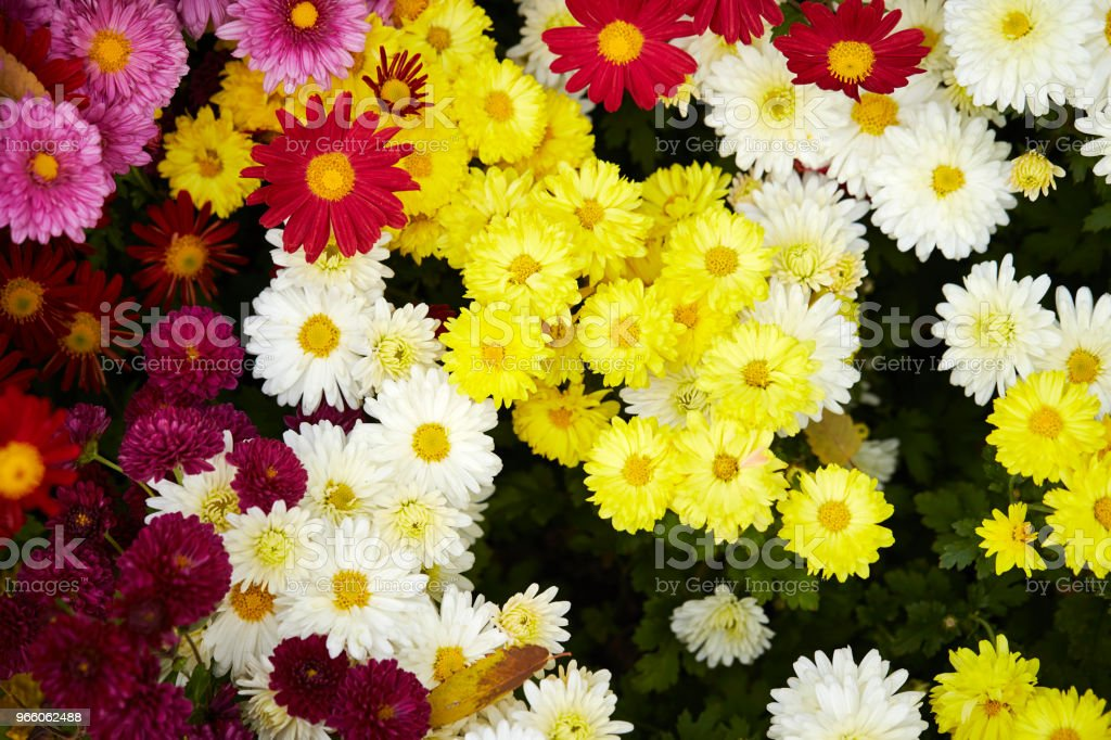 Flower garden - Royalty-free Achtergrond - Thema Stockfoto