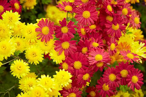 Flower Garden Stockfoto en meer beelden van Achtergrond - Thema