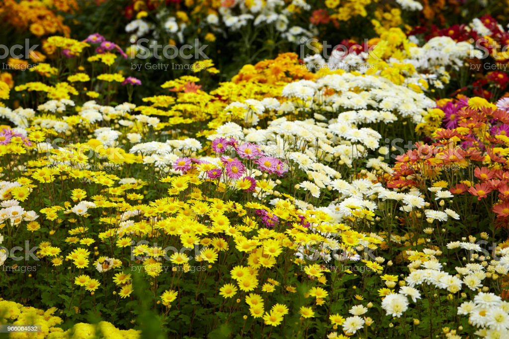 Flower garden - Royalty-free Backgrounds Stock Photo
