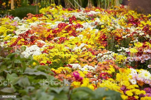 Blomma Trädgård-foton och fler bilder på Bildbakgrund