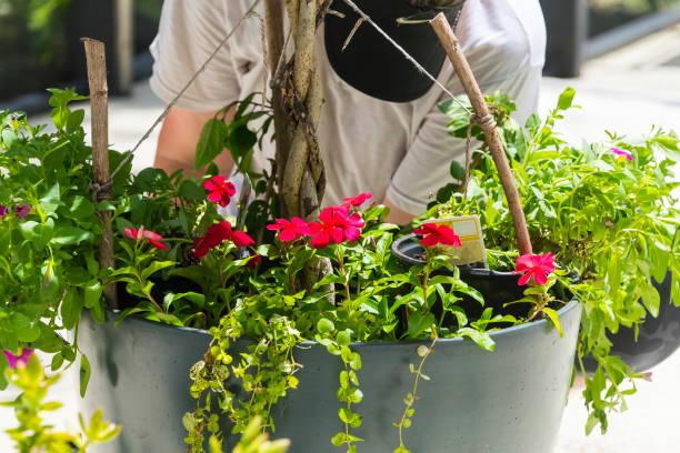 Flower Garden Pot Preperation stock photo