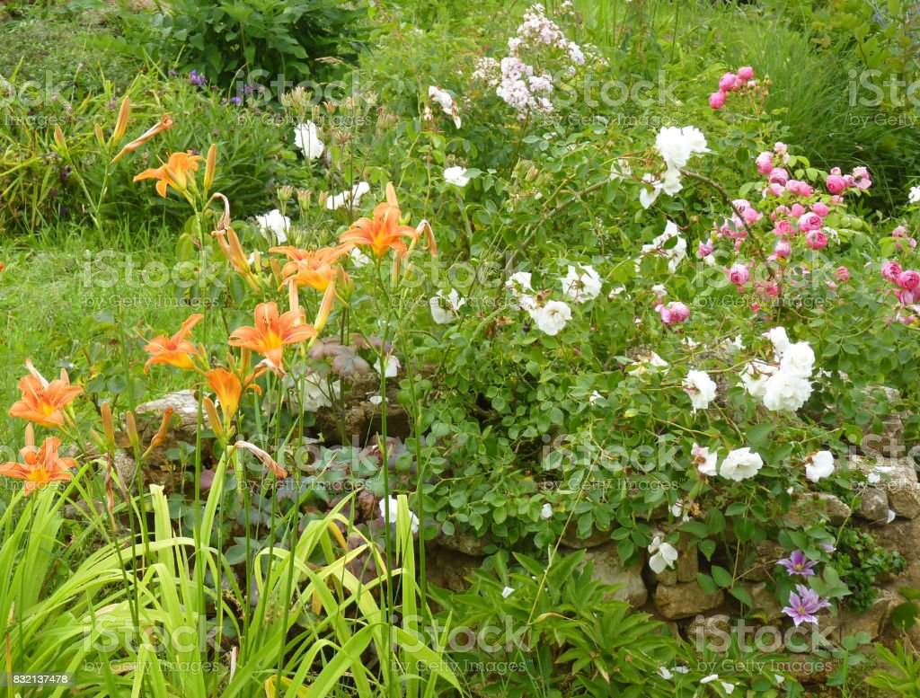 Flower Garden with Rose and Daylily Flowers stock photo