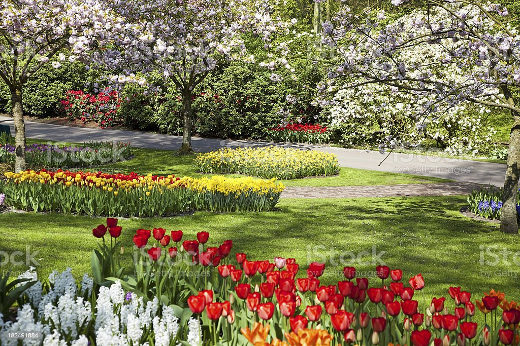 Flower garden # 64 XXXL royalty-free stock photo
