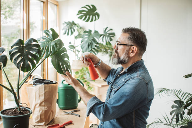 Flower gardening during isolation period Mature man caring about his plants during corona virus isolation period hobbies stock pictures, royalty-free photos & images