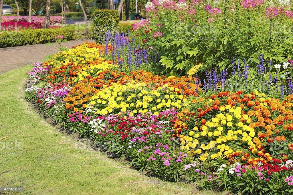 Flower gardens in Thailand stock photo