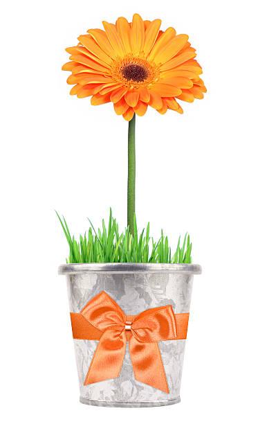 Blume in einen Topf-Geschenk – Foto