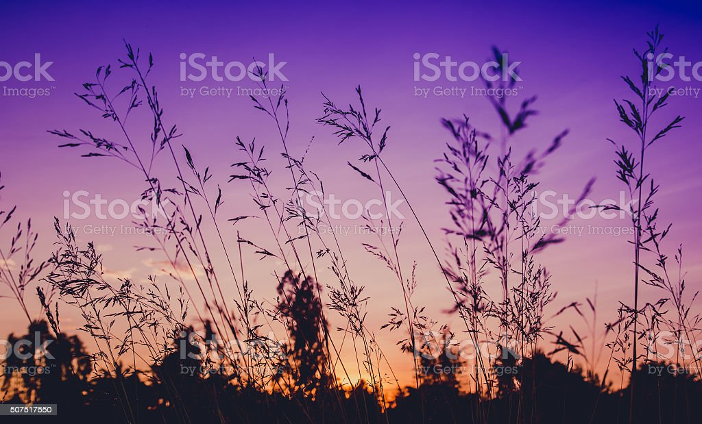 flower grass at relax morning time :soft focus , stock photo