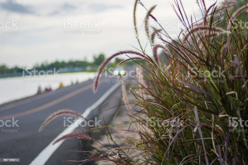 flower grass near road stock photo