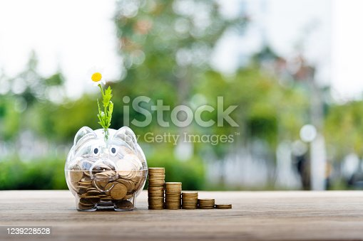 Flower growing from piggy bank full of coins.
