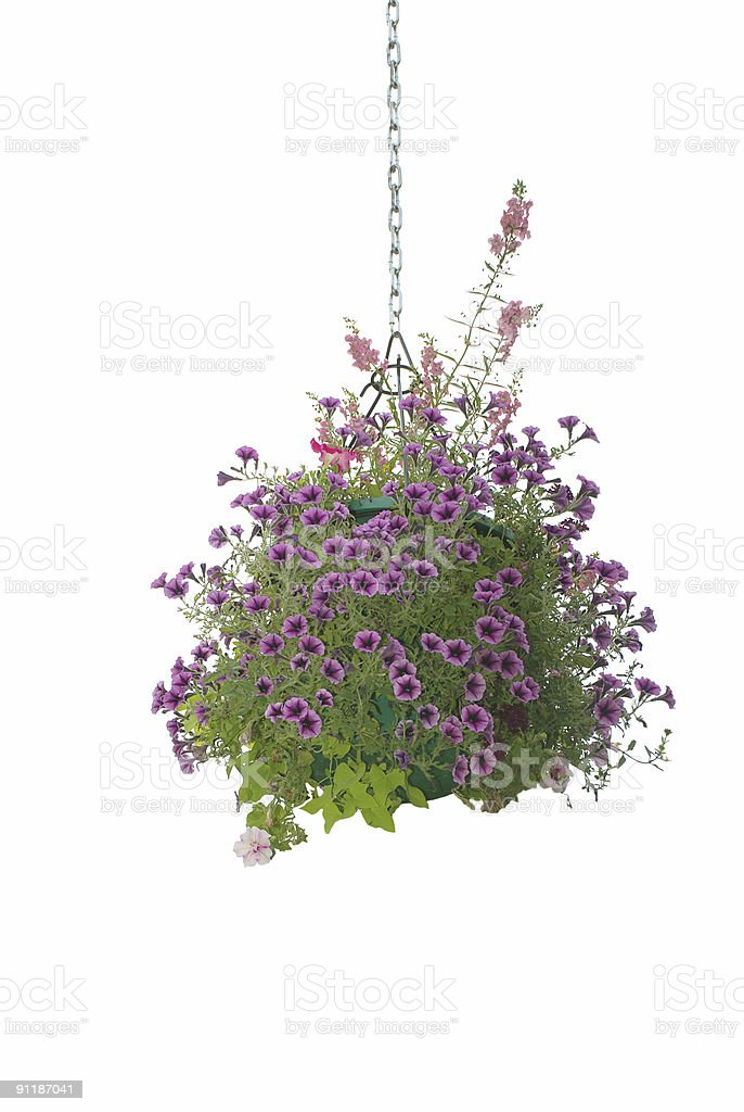 Flower hanging basket stock photo