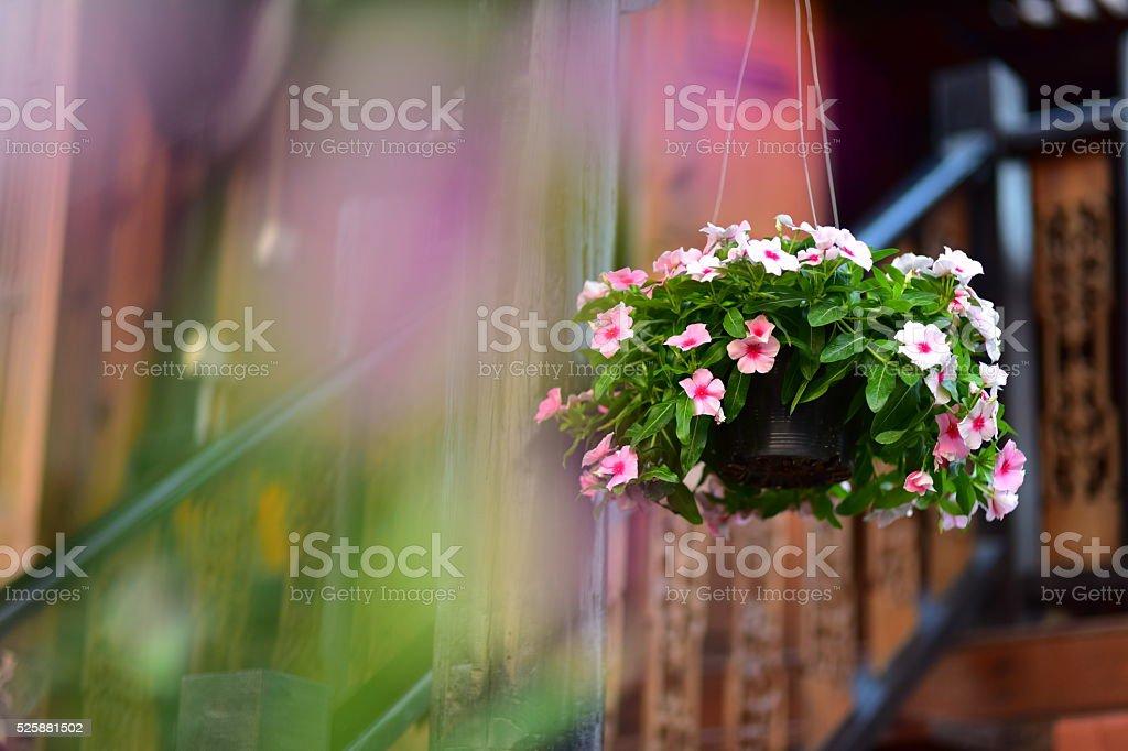 Blumen hängende Dekoration – Foto