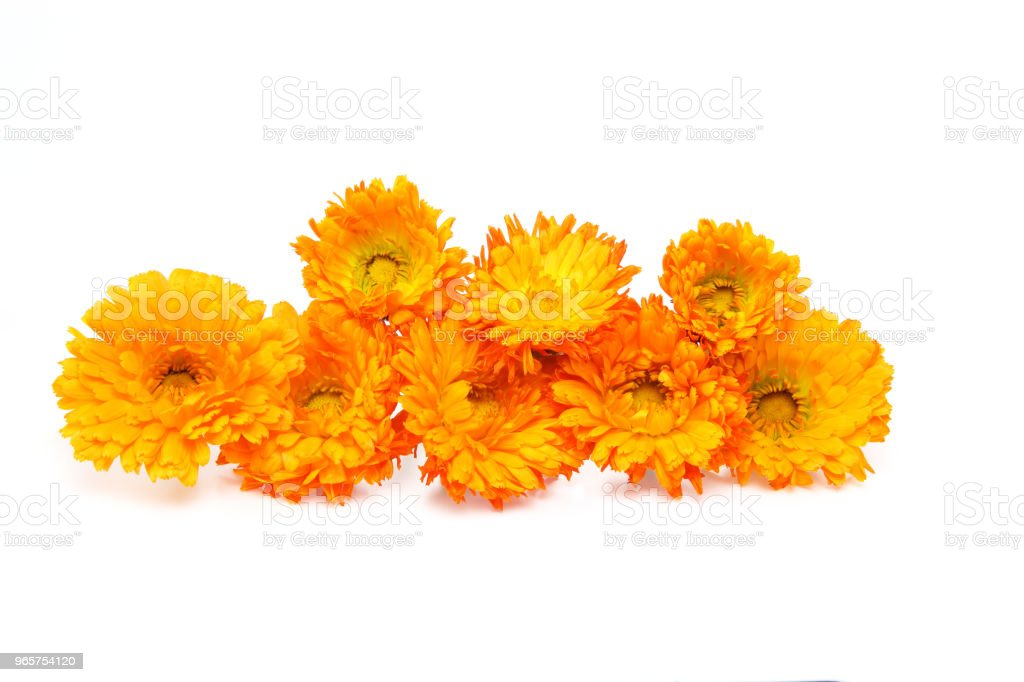 flower head of calendula in a white background - Royalty-free Beauty Stock Photo