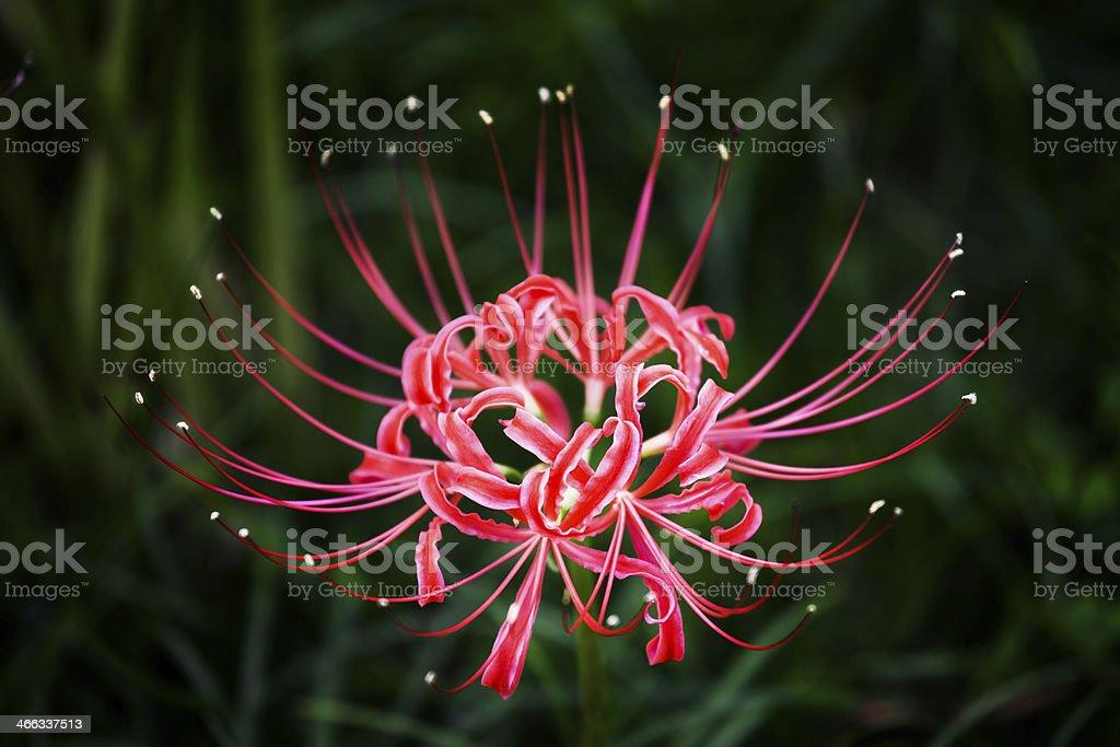 Flower Head stock photo