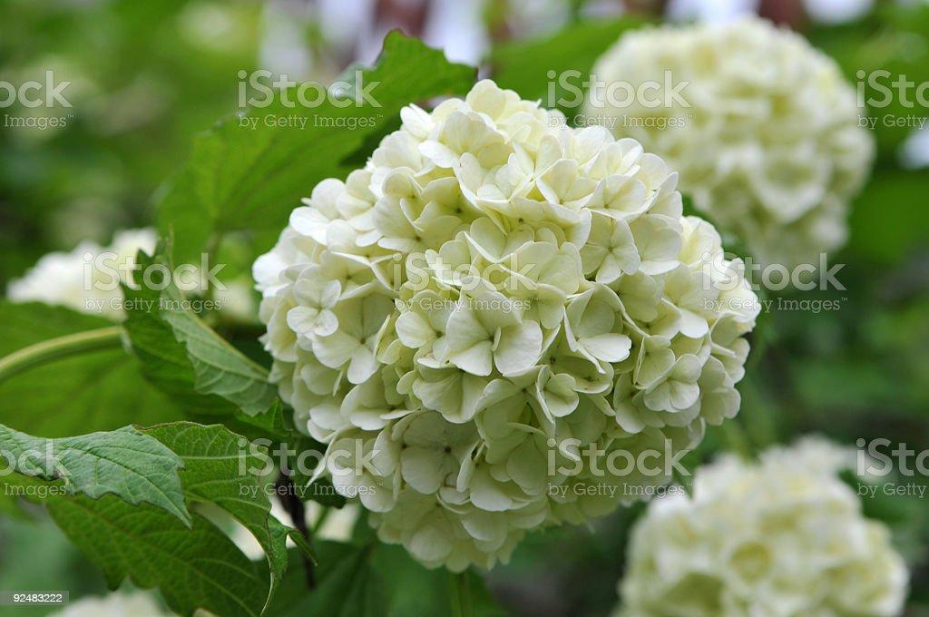 flower head royalty-free stock photo
