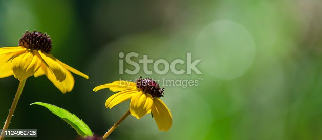 web banner with a copy space, selective focus
