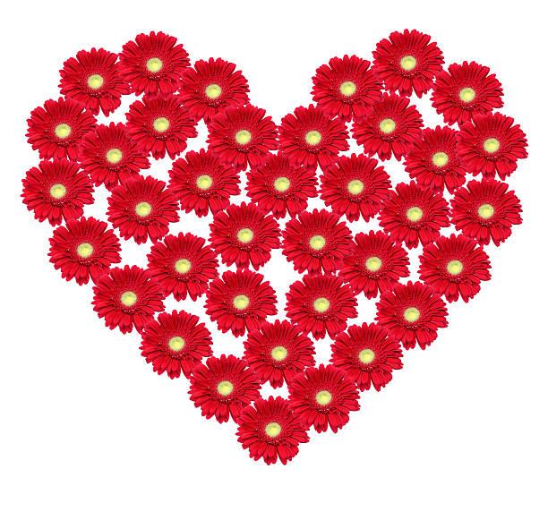 Blume Herzen – Foto