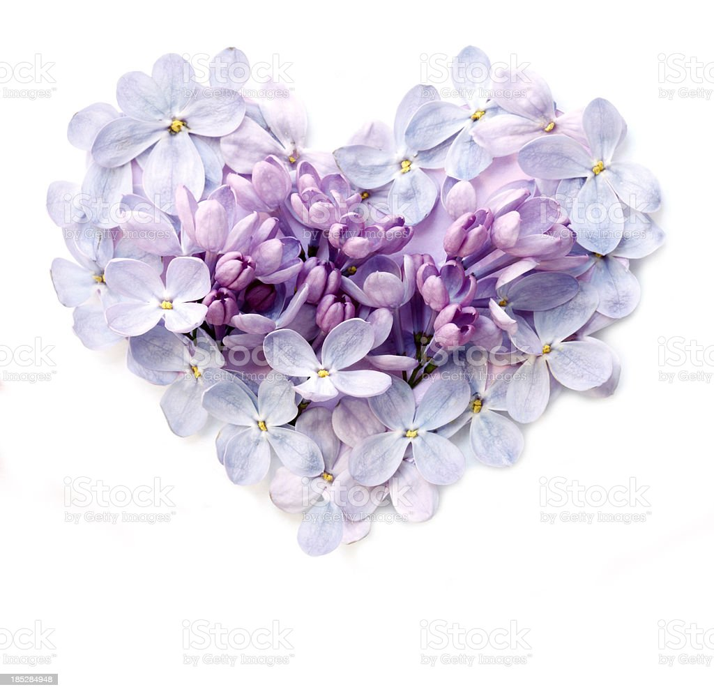 Flower Heart stock photo