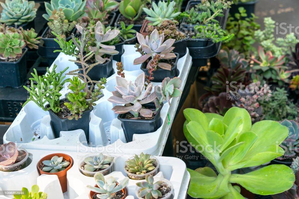 Flower Houseplants Street Shop Various Types Of Succulent Cactus