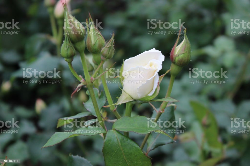 Flower Immersion royalty-free stock photo