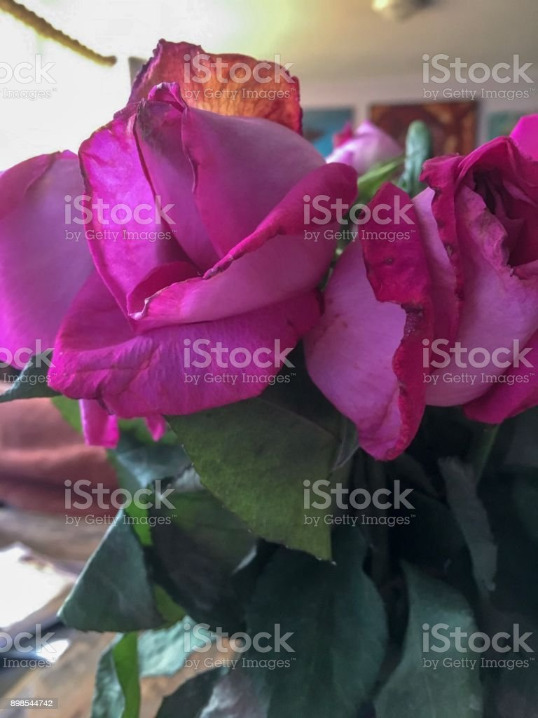 Flower Immersion stock photo