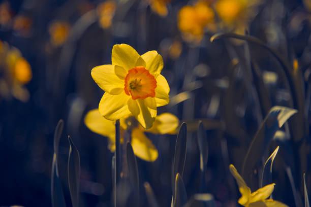 Flower in a Field stock photo