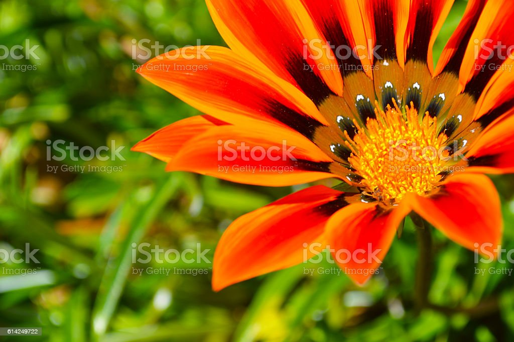 Flower in a garden royalty-free stock photo