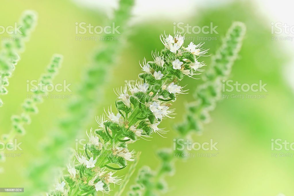 Flower in a meadow (unusual flowers) royalty-free stock photo