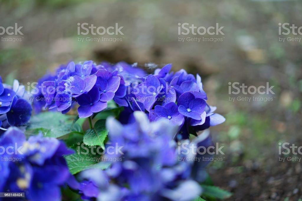 Blomma i en park i juni - Royaltyfri Blomma Bildbanksbilder