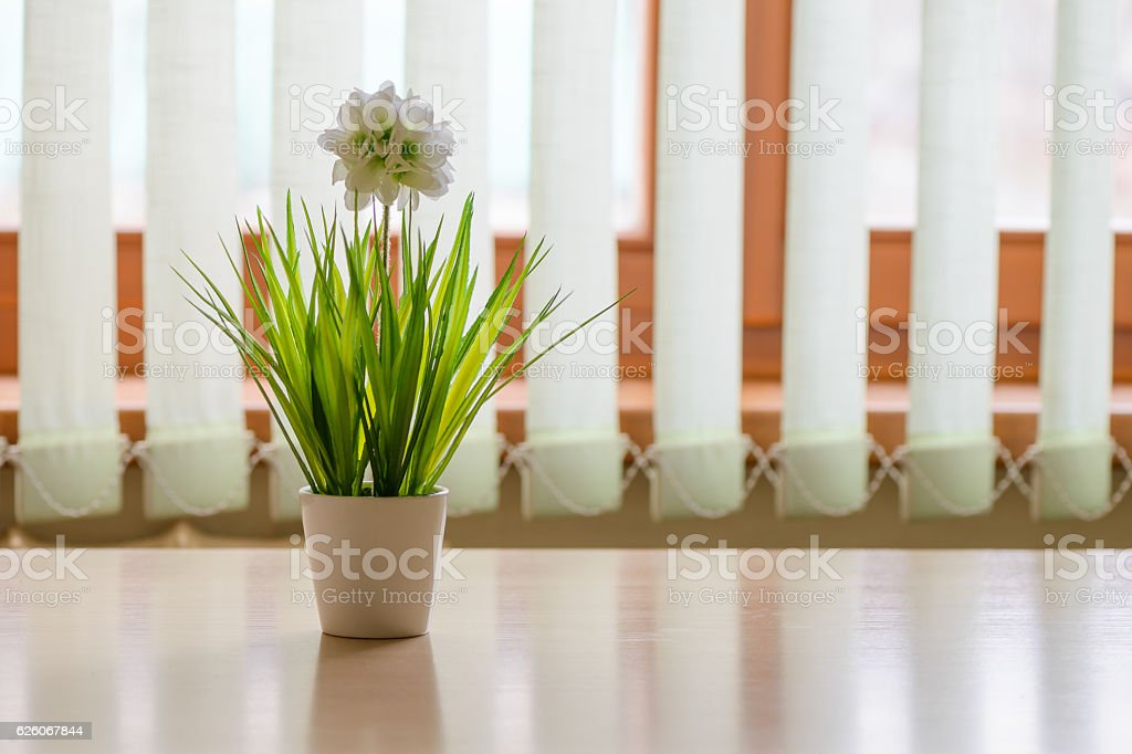 flower in a pot on the kitchen table – Foto