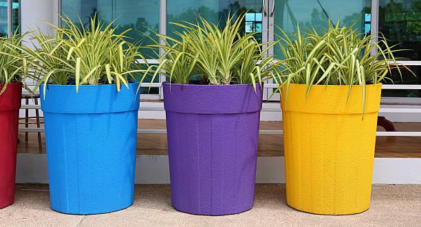 flower in big colorful pot, garden decoration - blumentopf groß stock-fotos und bilder