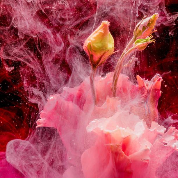 Blume in buntem Wasser – Foto