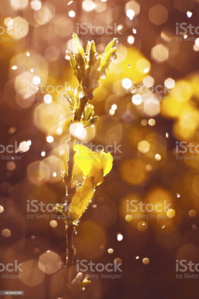 flower in  dew royalty-free stock photo