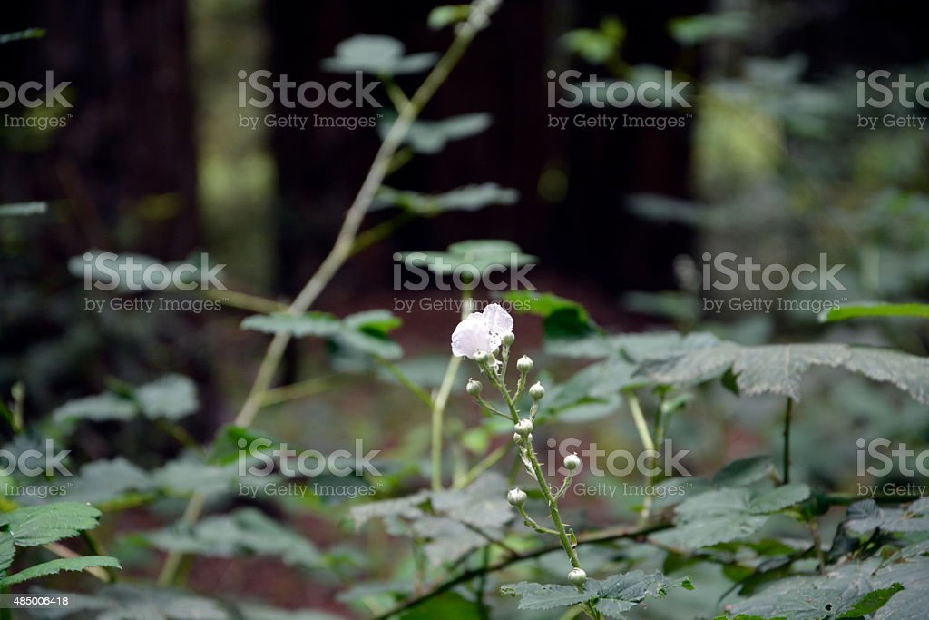 Flower in forest stock photo