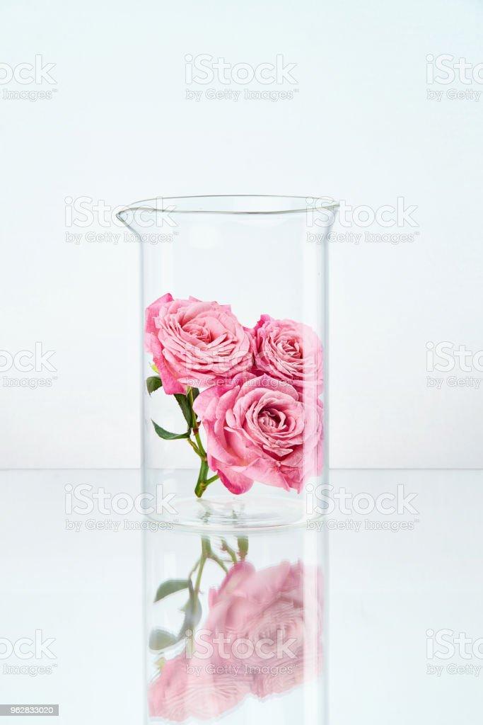 Flower In Laboratory Glass - Foto stock royalty-free di Attrezzatura