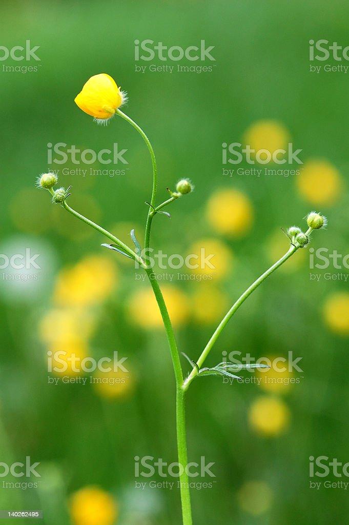 Blüte im Frühling – Foto